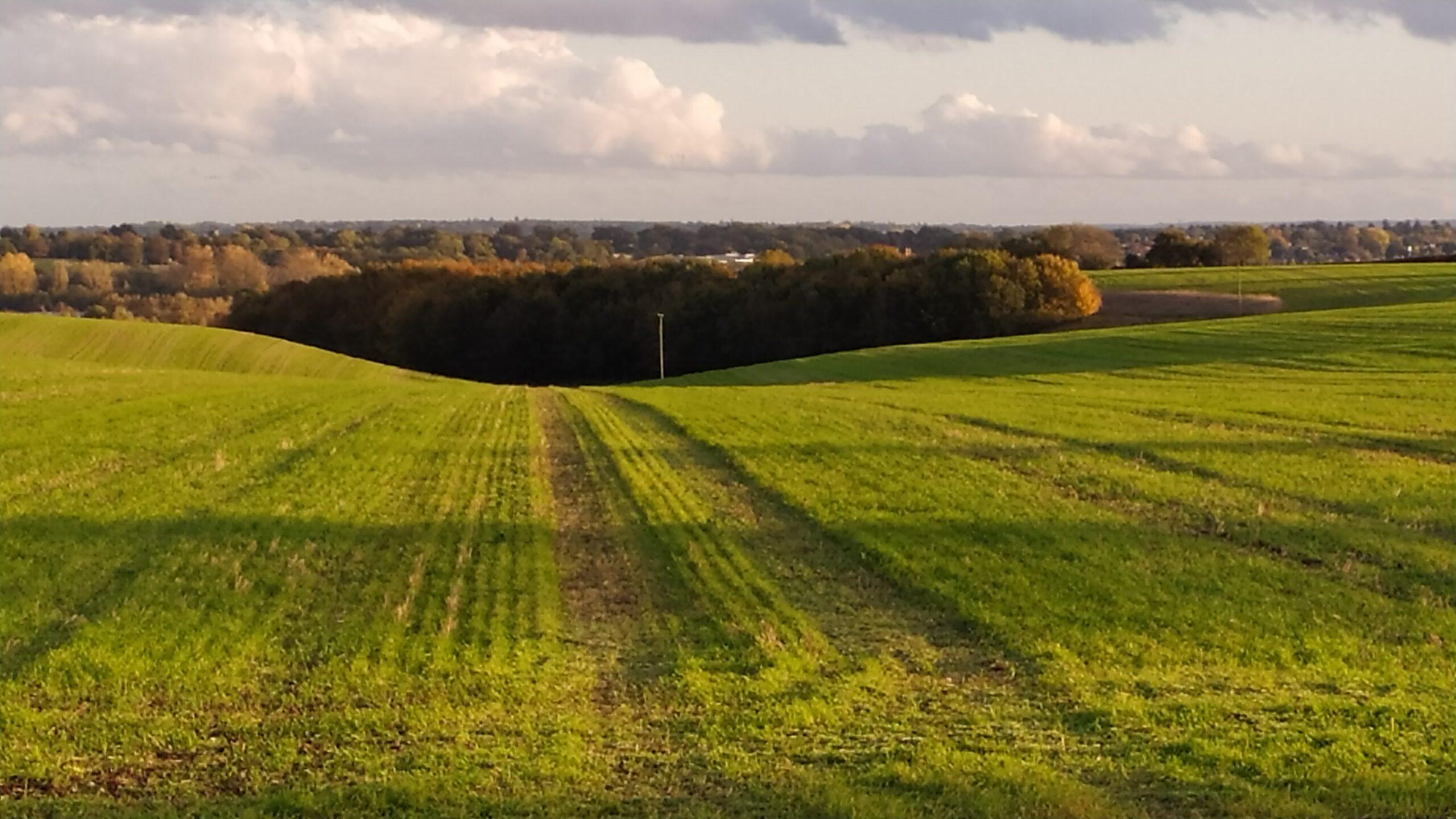 Dunsden view